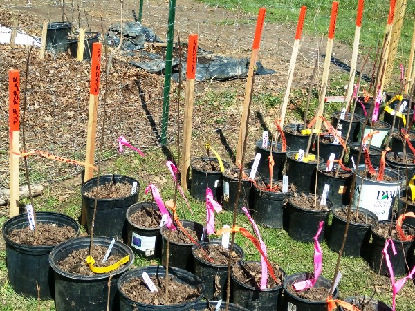 2018.04.07 Potted Trees with stake names 450x600